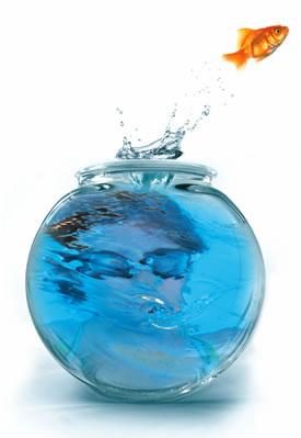 [fishbowl.jpg]