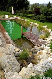 green dream team piscine traditionnelle ou piscine naturelle. Black Bedroom Furniture Sets. Home Design Ideas