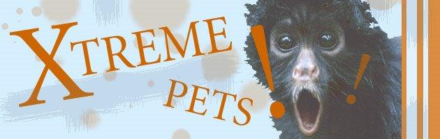 Xtreme Pets!