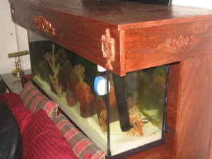 D Listed Decor 55 Gallon Saltwater Fish Tank Bed 1700