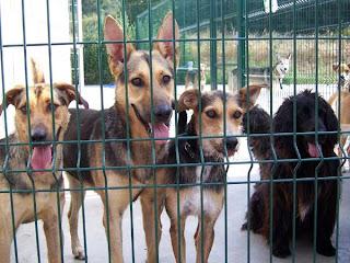 L'alcalde de PLF, Valentí Agustí, defensa el sacrifici d'animals perque les gosseres estan plenes.