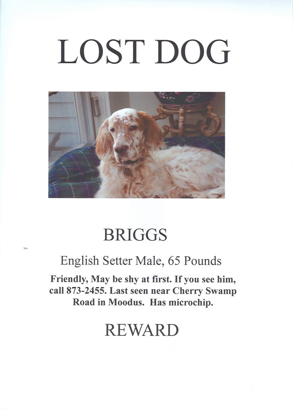 Moodus Sportsmen\'s Club: Lost Dog