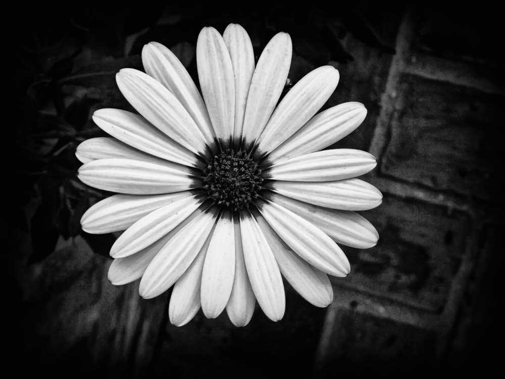 Black white flower