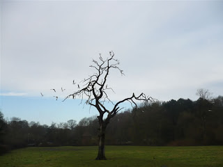 Dead oak, gull fleeing