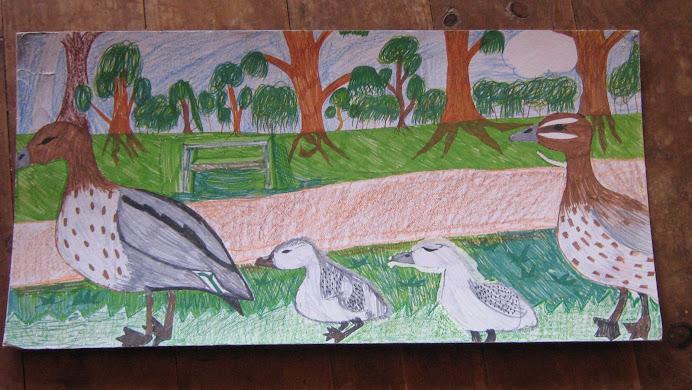 Cass' ducks.