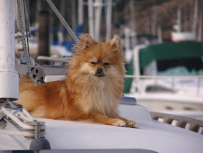 Sweet Little Sailing Dog
