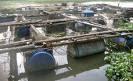 FishPlaza & Ternakan akuakultur: Contoh-contoh kolam ...