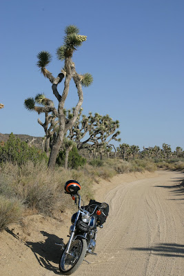 2008-06-30_43_Joshua Tree National Park_CA_b.jpg