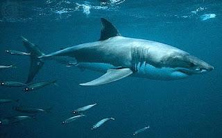 Nanii Tubarão 9