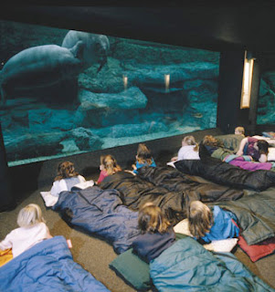 Ultra Cool Birthday Party Zoo Sleepover