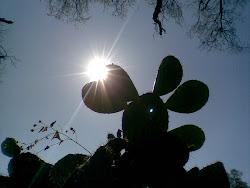 Nopal con Sol