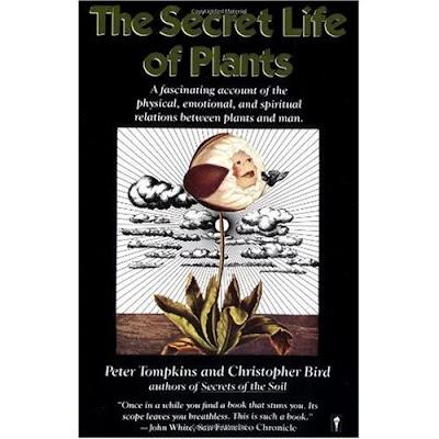 plantas de casa a vida secreta das plantas