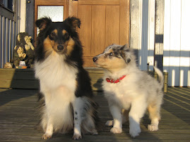 Nellie och Nova