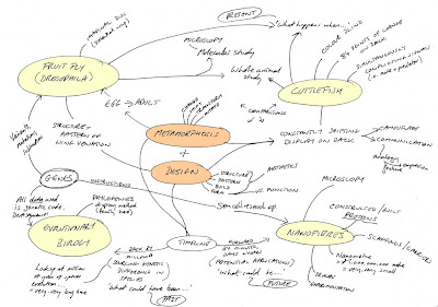 brainstorming models As an addition to the creativity techniques mentioned- here's a mind mapping / brainstorming process i frequently use, mostly in connection with.