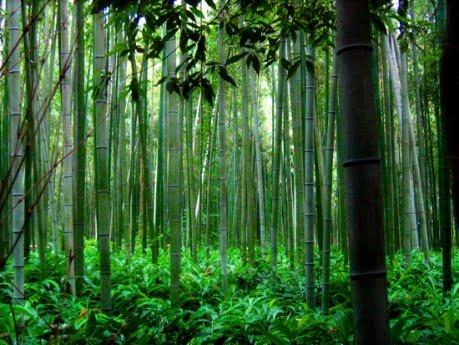 Image result for paduri frumoase