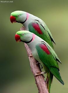 Pets World: Parrots as your Pet Friend
