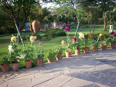 Home garden pictures india.