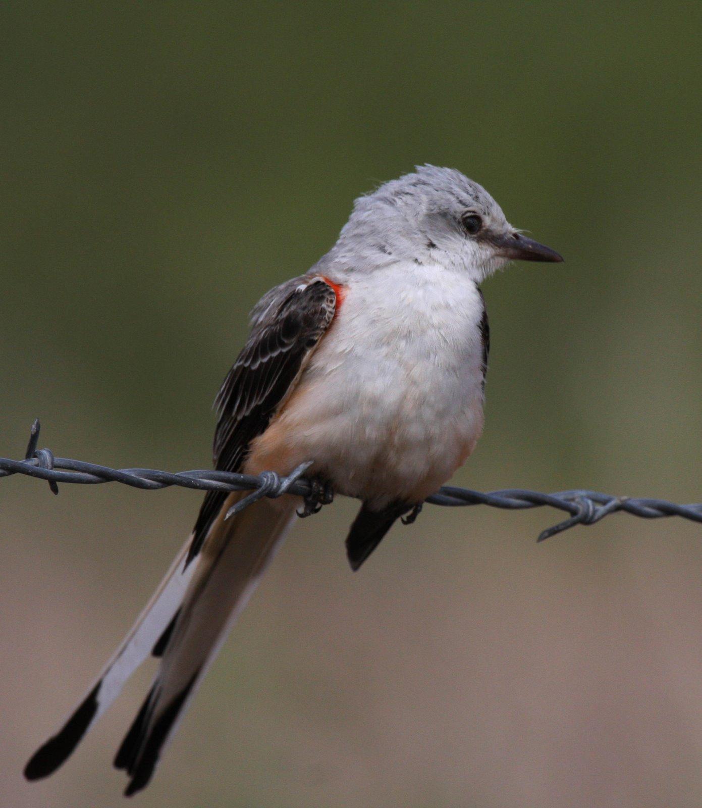 wyncote audubon society photography group VdOe