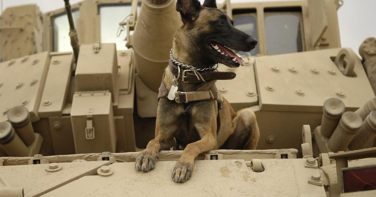 The World Needs A Stronger Blog Dogs Of War