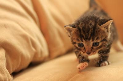 de natuur om je heen kleine kittens