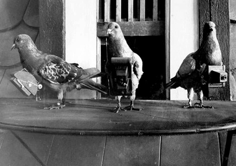 17 ways that pigeons are cooler than humans