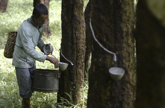 petani karet Di Paluta Harga Karet dan TBS Membaik