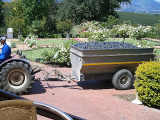 Bringing Grapes to Neetlingshof