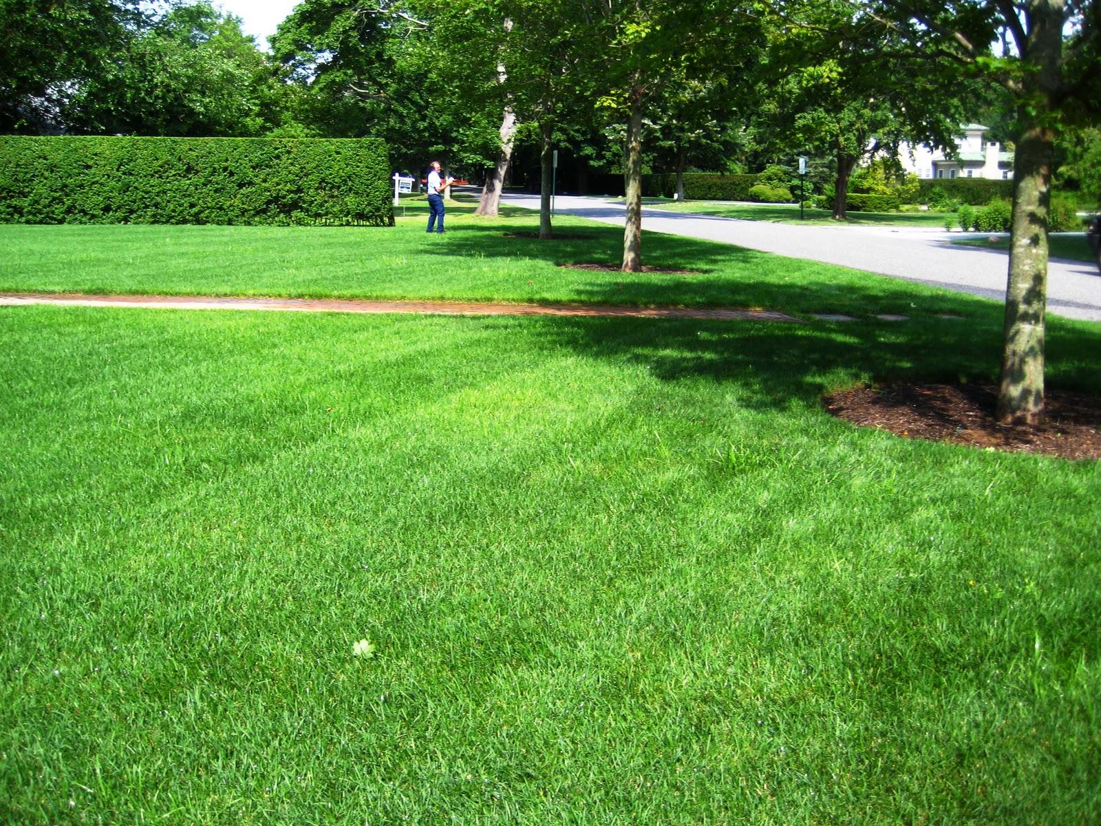 Long Island S Garden Girl Stop Drop That Fertilizer