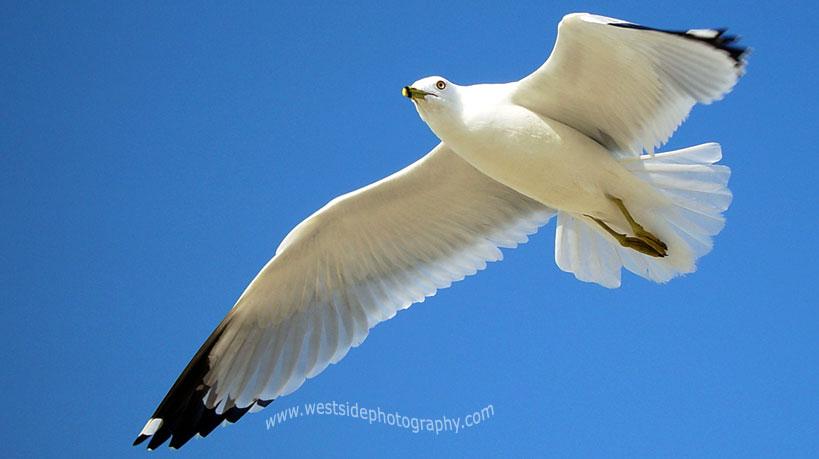 sea bird fly