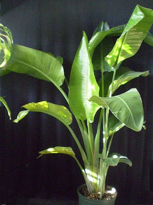 Plants Are The Strangest People List Houseplants With