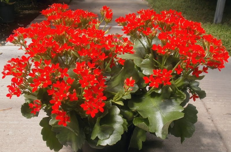 Plants Are The Strangest People List Houseplants That Have Red Flowers