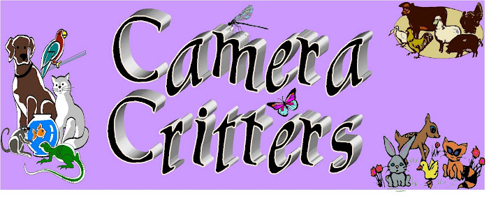 Camera Critters Meme