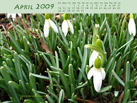 Snowdrops - April Wallpaper
