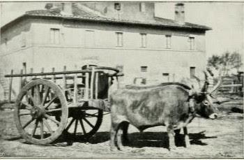 Tradizioni Popolari Carro trainato da buoi nella campagna