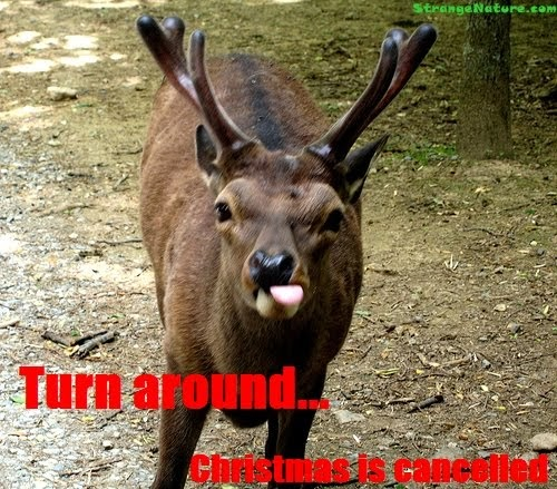 Pictures Of Animals With Quotes: Funny Animal Christmas Pictures