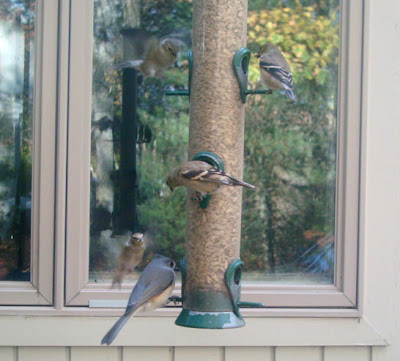 A Potential Simple Method For BirdProofing Windows Sibley Guides - Window decals for bird protection