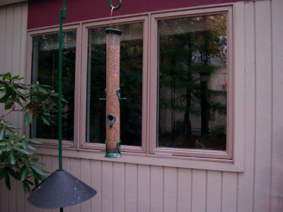 A Potential Simple Method For BirdProofing Windows Sibley Guides - Invisible window decals for birds