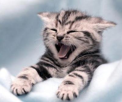 ho un tale sonno che praticamente sto scrivendo ad occhi chiusi...c'è qualcuno che stà sbadigliano come me però! lo sai che lo sbadiglio è contagioso! piantala! dans gatti funny-cats-a10