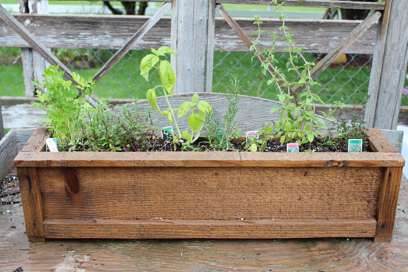 The Simpler Life at Perennial Gardens: Patio Herb Garden