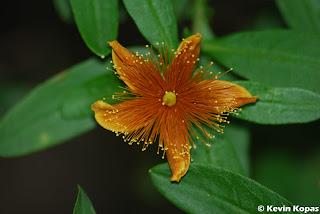 Flower; Shot by Kevin Kopas with a Nikon D80