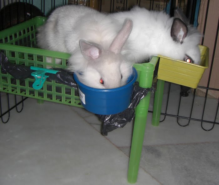 Deter rabbit from peeing in a spot in cage