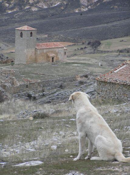[Perro+en+Caracena.jpg]