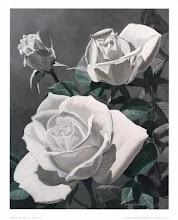As rosas não falam !