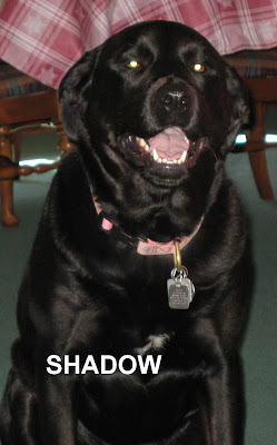 A Dog S Purpose Beaverton