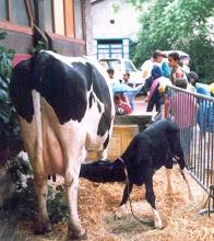 Ferme temporaire à Prémol 1998