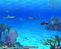 Screensaver animati gratis per PC: Acquario, Matrix e sfondi personalizzati