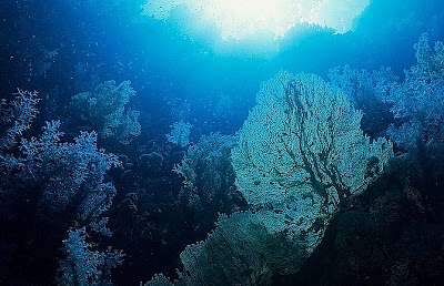Deep reef in the Red Sea