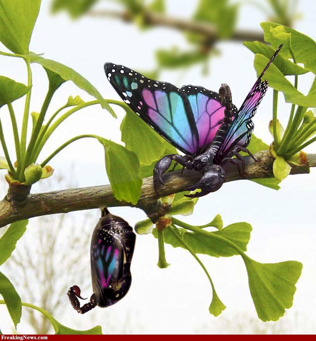 Free Wallpapers: Butterfly Wallpapers, Butterfly