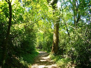El bosque Prohibido Bosque