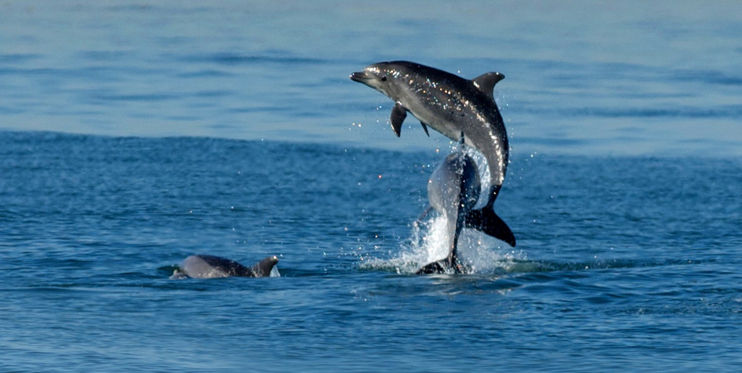 Cute Dolphin Wallpapers Cute Baby Dolphins Pictures Impremedia Net
